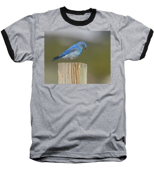 Daddy Bluebird Guarding Nest Baseball T-Shirt