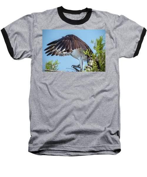 Daddy Osprey On Guard Baseball T-Shirt