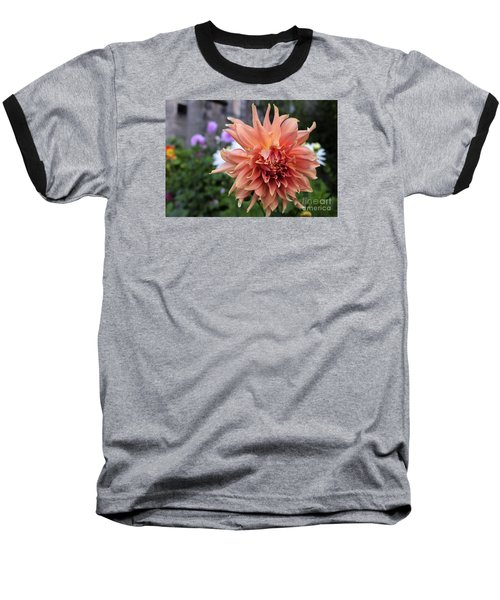Dahlia - Inverness Baseball T-Shirt by Amy Fearn