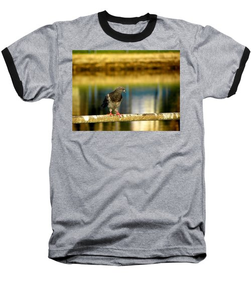 Daytona Beach Pigeon Baseball T-Shirt by Chris Mercer