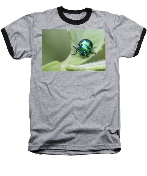 Dead-nettle Leaf Beetle - Chrysolina Fastuosa Baseball T-Shirt