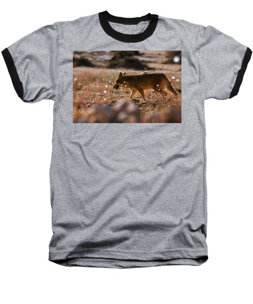 Baseball T-Shirt featuring the photograph Death Valley Coyote And Flowers by Daniel Woodrum
