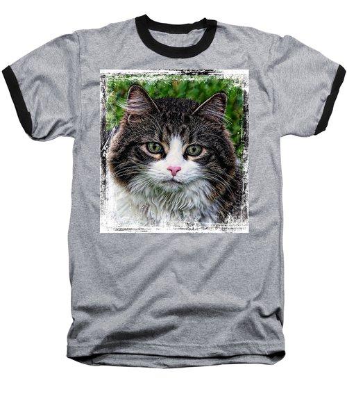 Decorative Maine Coon Cat A4122016 Baseball T-Shirt