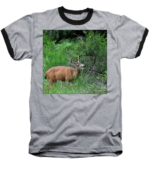 Baseball T-Shirt featuring the photograph Deer Brunch by Tanya Searcy