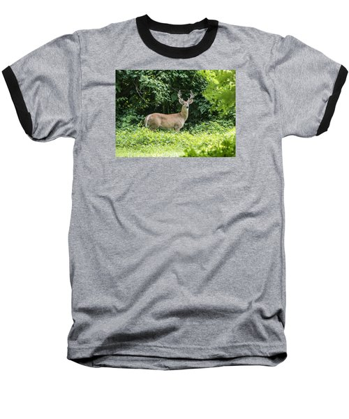 Eastern White Tail Deer Baseball T-Shirt