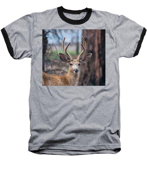 Deer Stare Baseball T-Shirt