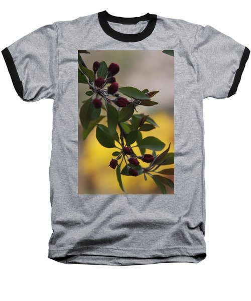 Delicate Crabapple Blossoms Baseball T-Shirt by Vadim Levin