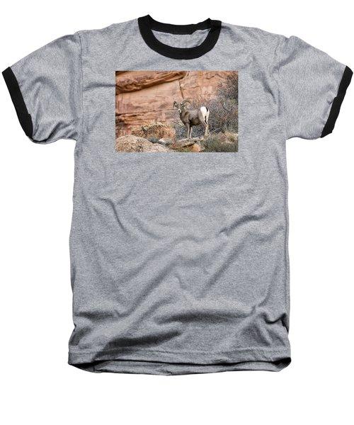 Desert Bighorn Baseball T-Shirt