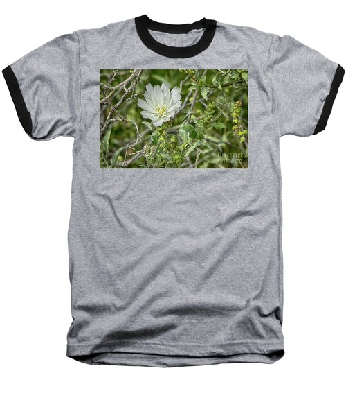 Baseball T-Shirt featuring the photograph Desert Chicory   Rafinesquia Neomexicana by Anne Rodkin