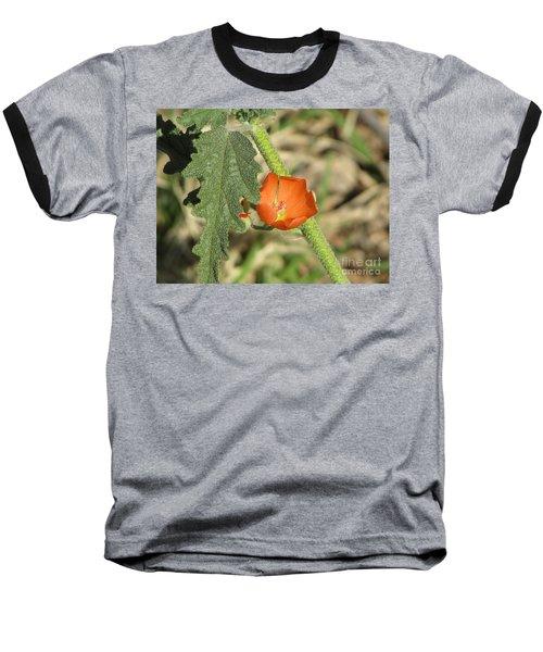 Desert Globemallow Bloom 202 Baseball T-Shirt by En-Chuen Soo