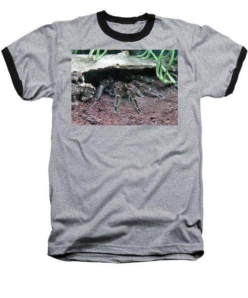 Desert Tarantula Baseball T-Shirt