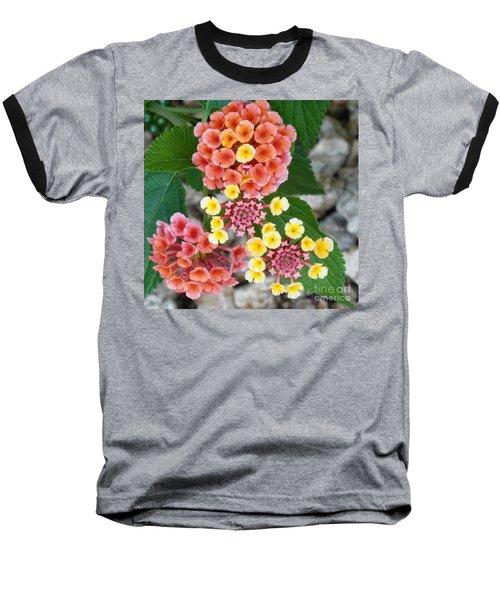 Dillards Darlings Baseball T-Shirt