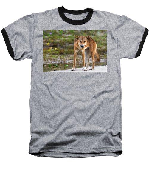Dingo On 75 Mile Beach, Baseball T-Shirt
