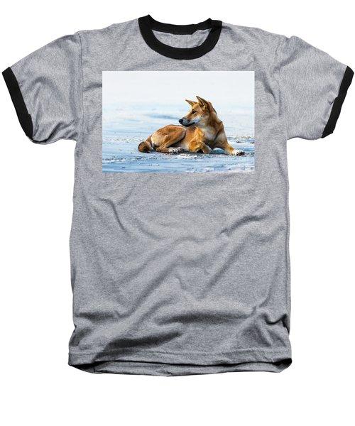 Dingo On Fraser Island Beach Baseball T-Shirt