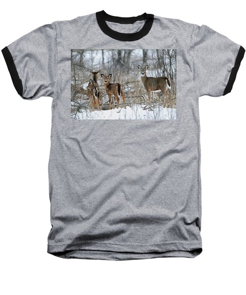 Does And Fawns Baseball T-Shirt by Brook Burling