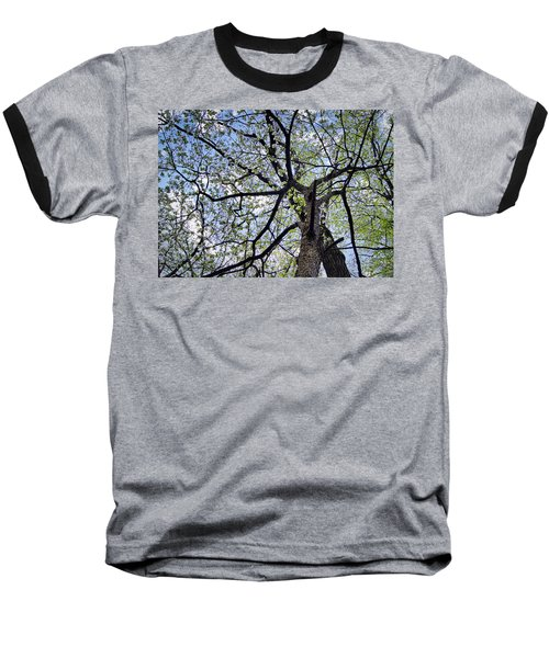 Dogwood Canopy Baseball T-Shirt