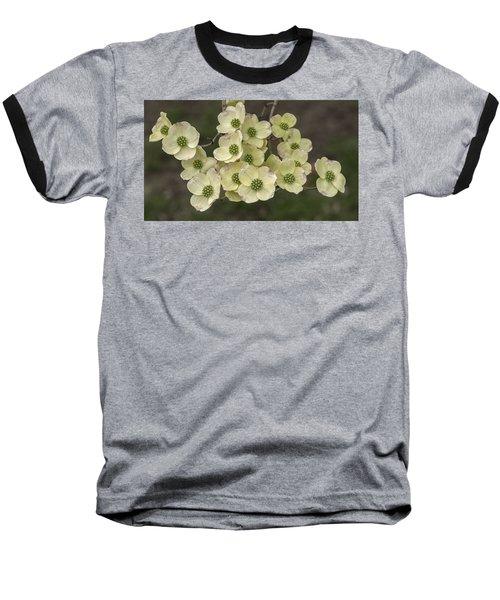 Dogwood Dance In White Baseball T-Shirt by Don Spenner