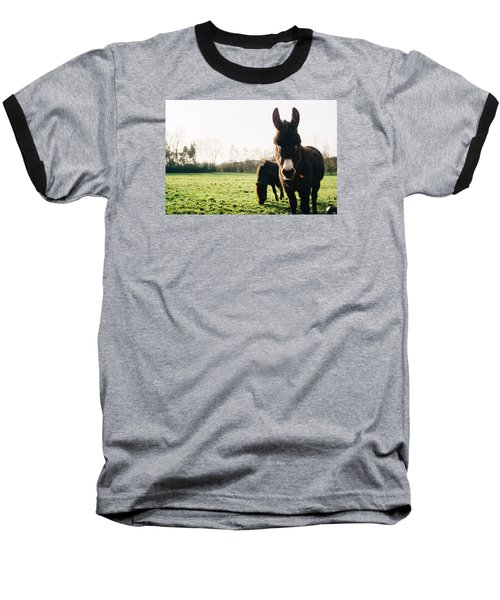 Donkey And Pony Baseball T-Shirt by Pati Photography