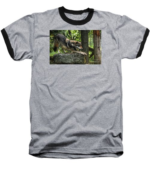 Downward Facing Wolf Baseball T-Shirt by William Fields