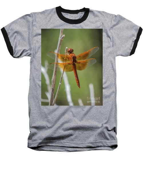 Dragonfly 10 Baseball T-Shirt