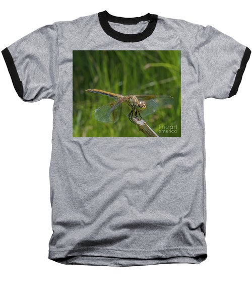 Dragonfly 7 Baseball T-Shirt
