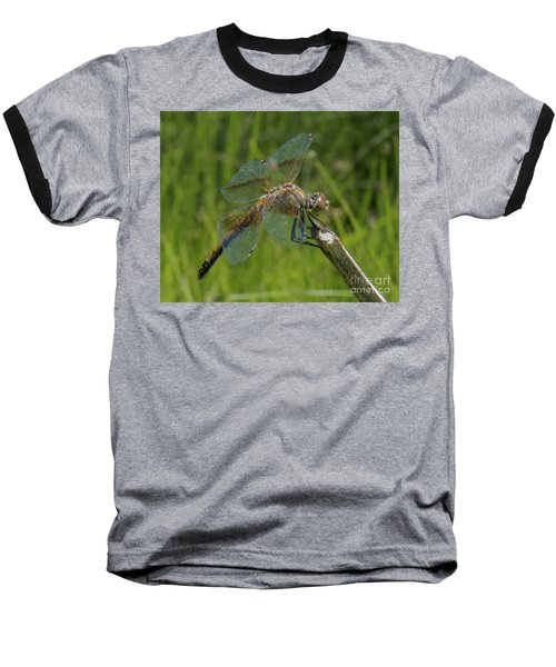Dragonfly 8 Baseball T-Shirt