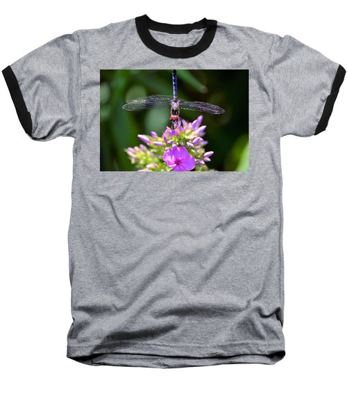 Dragonfly And Phlox Baseball T-Shirt by Kathy Eickenberg