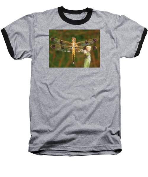 Baseball T-Shirt featuring the photograph Painted Skimmer Dragonfly by Phyllis Beiser