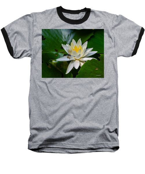 Dragonfly On Waterlily  Baseball T-Shirt