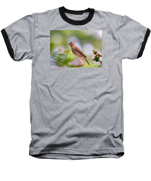 Dreamy Finch Baseball T-Shirt by Lisa L Silva