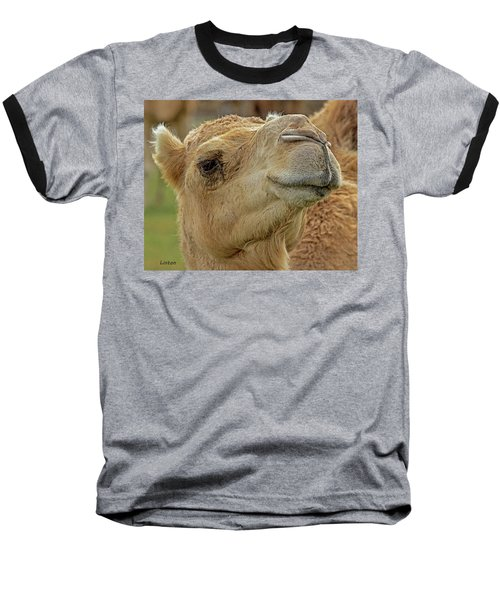 Dromedary Or Arabian Camel Baseball T-Shirt