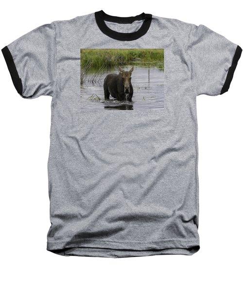 Drooling Cow Moose Baseball T-Shirt
