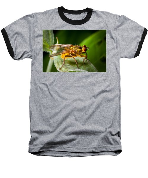 Dung Fly On Leaf Baseball T-Shirt