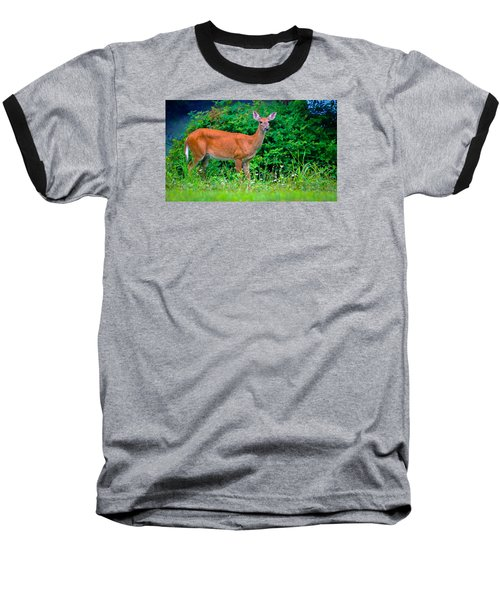 Dusk Deer Baseball T-Shirt by Brian Stevens