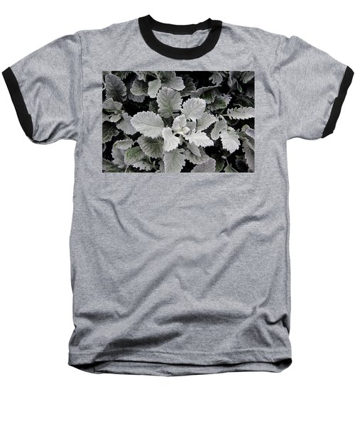 Dusty Miller Baseball T-Shirt