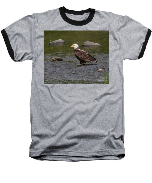 Baseball T-Shirt featuring the photograph Eagle Deep In Thought by Debbie Stahre