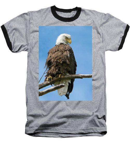 Eagle On Perch Baseball T-Shirt