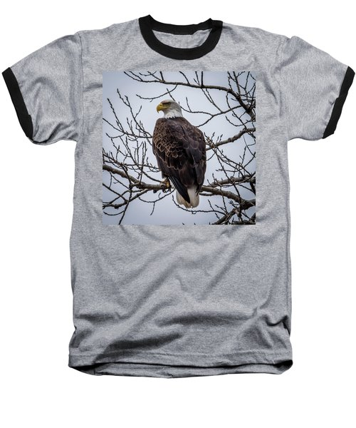 Baseball T-Shirt featuring the photograph Eagle Perched by Paul Freidlund