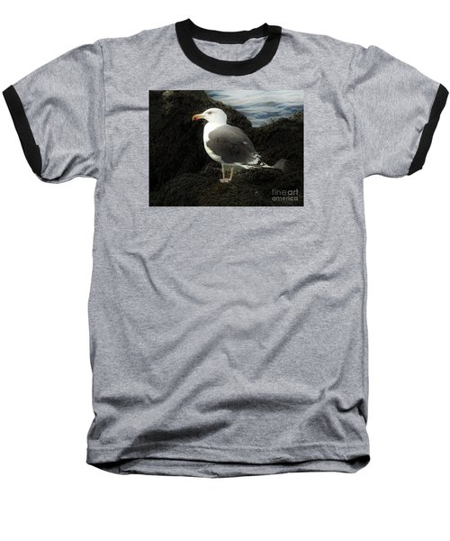 East Coast Herring Seagull Baseball T-Shirt