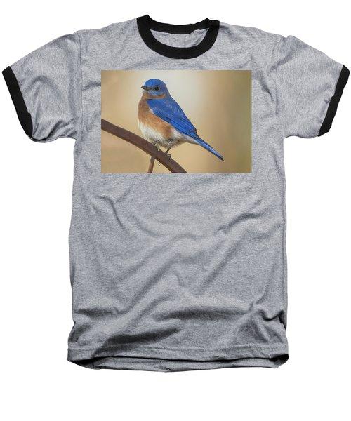 Eastern Blue Bird Male Baseball T-Shirt