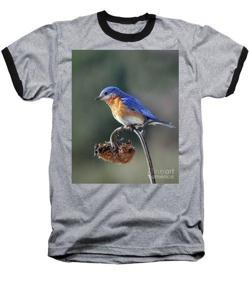 Eastern Bluebird In Spring Baseball T-Shirt by Amy Porter
