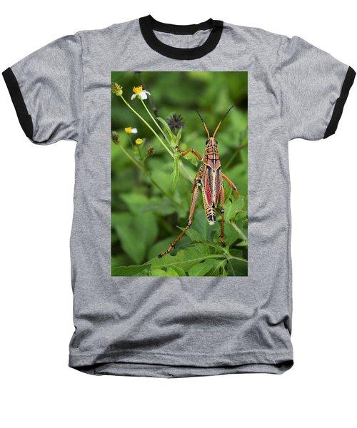 Eastern Lubber Grasshopper  Baseball T-Shirt by Saija  Lehtonen