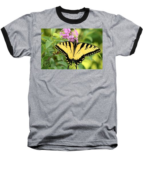 Eastern Tiger Swallowtail Butterfly Baseball T-Shirt by Sheila Brown