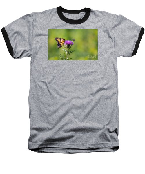 Eastern Tiger Swallowtail Baseball T-Shirt by Rima Biswas
