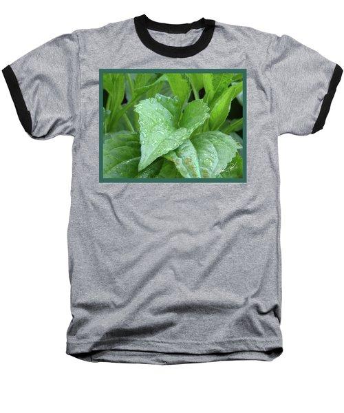 Echinacea After The Rain I Baseball T-Shirt