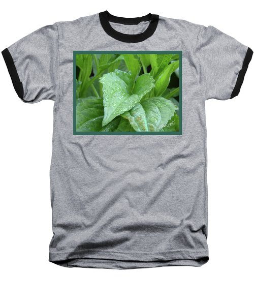Echinacea After The Rain I Baseball T-Shirt
