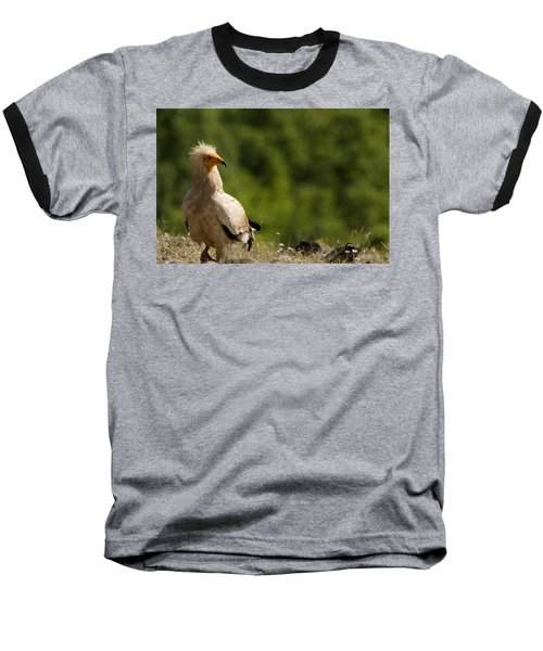 Egyptain Vulture  Baseball T-Shirt