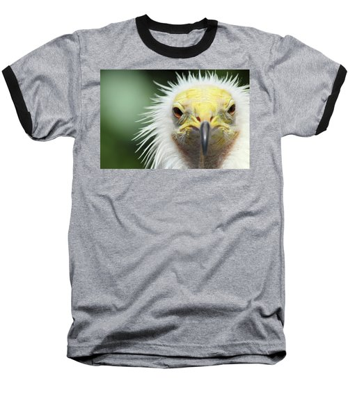Egyptian Vulture Baseball T-Shirt by David Stasiak