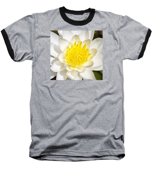 Elegant Lotus Baseball T-Shirt by Christopher L Thomley