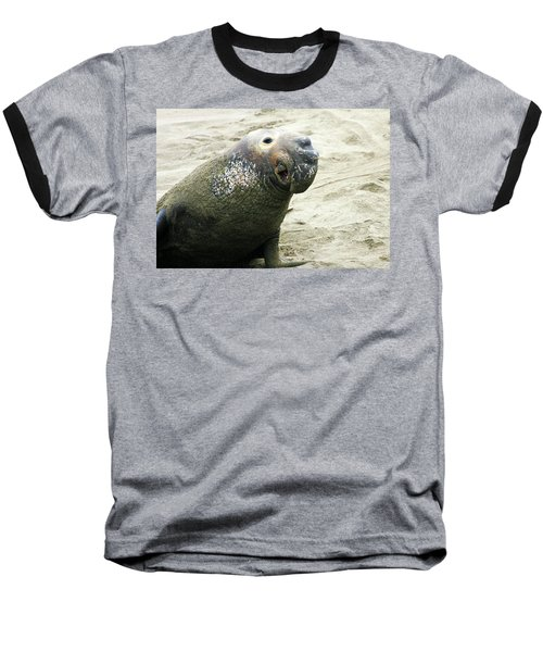 Baseball T-Shirt featuring the photograph Elephant Seal by Anthony Jones